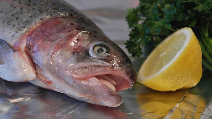 salmon-trout-540936_960_720
